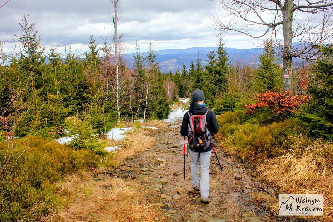 Szlak czerwony na Kiczory z Wielkiego Stożka w Beskidzie Śląskim