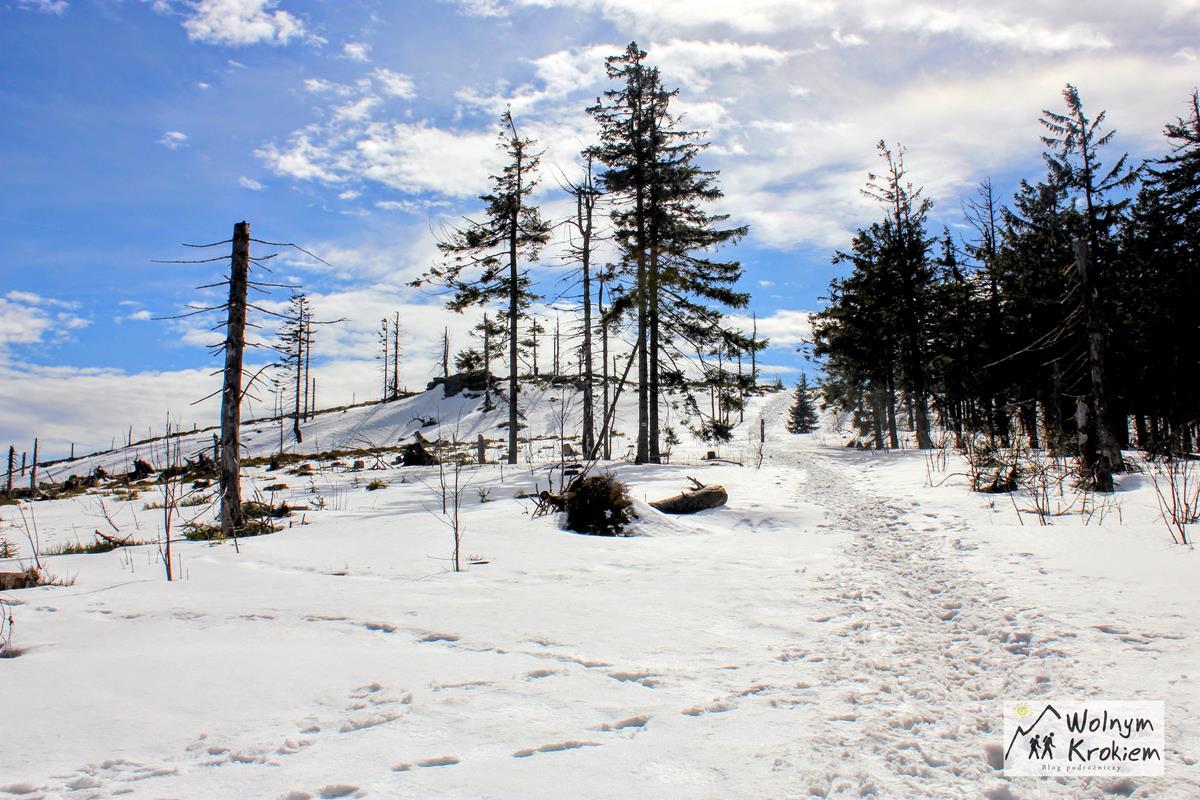 Niebieski szlak na Baranią Górę z Wisły Czarne