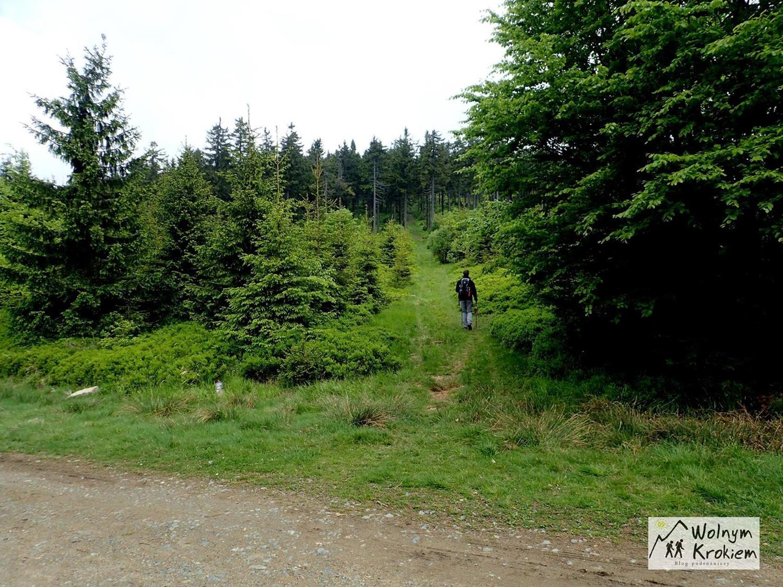 Szlak na Postawną (Korona Sudetów Polskich) z Ostrużnej w Czechach
