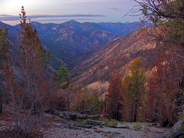 Warm Springs Creek. Frank Church Wilderness. Burned out in 2007. October 6, 2008. Copyright Ralph Maughan