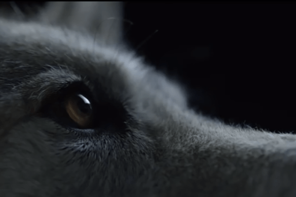 Wolves & Art News – New Music Video 'Siberian Nights' by The Kills