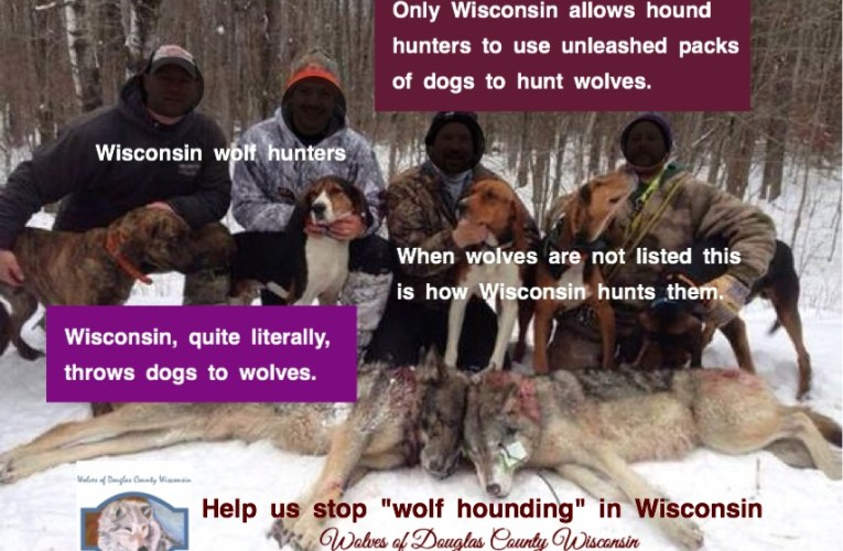"Wisconsin's citizens want to resolve the ""decades-old"" conflict between bear hounders and wolves through the legislative process"