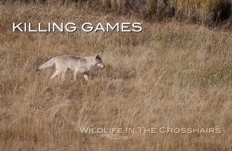 "Sneak Peek at Project Coyote's short film ""Killing Games – Wildlife in the Crosshairs"""