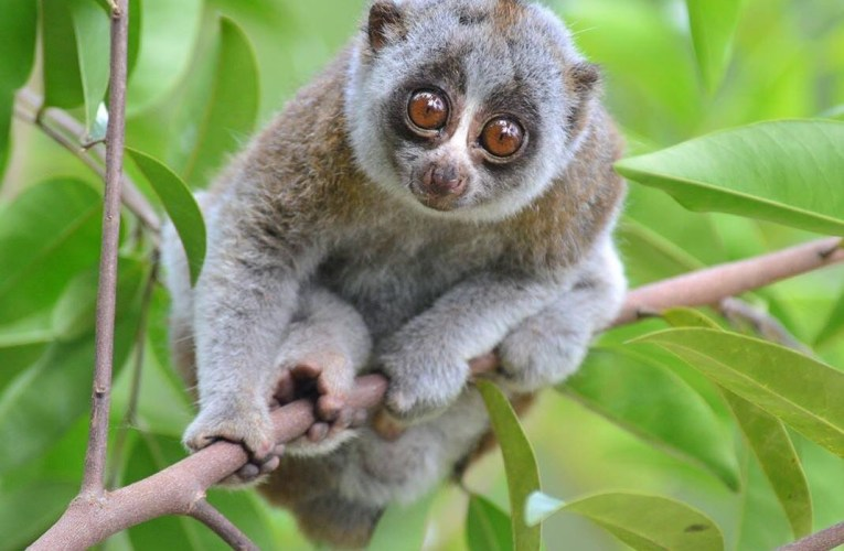 Saving Wild Sumatra