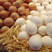 Можно ли пить сырое яйцо натощак