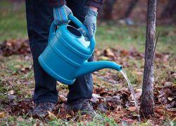 Правильный уход за садом осенью