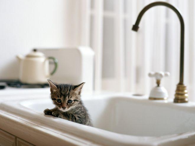 С какого возраста можно начинать мыть котенка