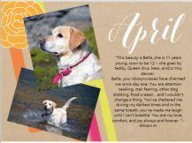 Pet Calendar Apr
