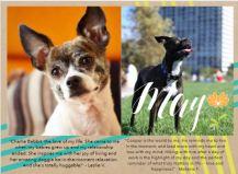 Pet Calendar May