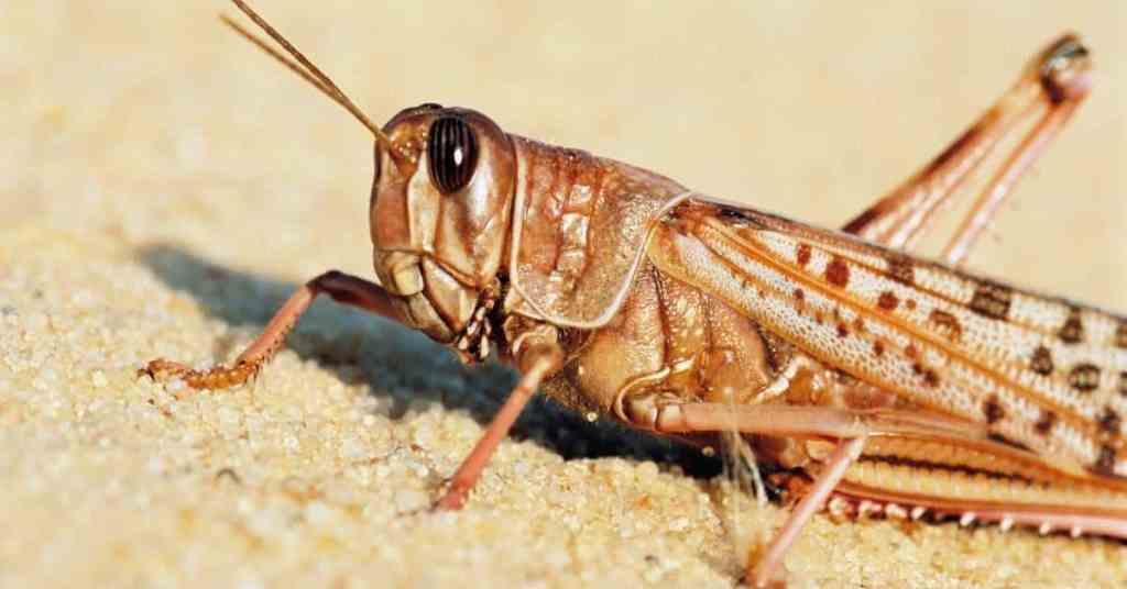 Bible Verses About Locust