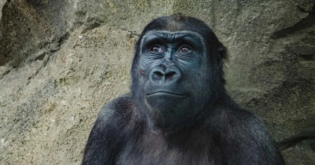 Bible Verses About Apes