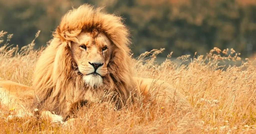 Bible Verses About Lions