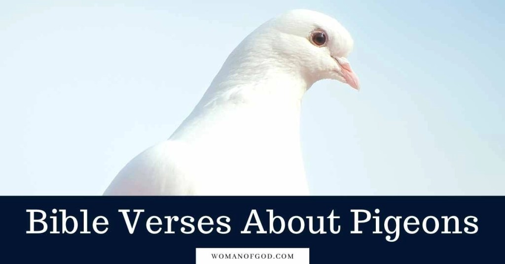 Bible Verses About Pigeons
