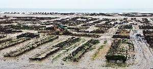 20140602_180912 oyster farm Cancale