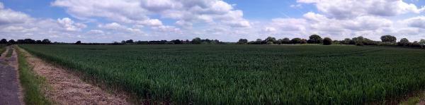 20140612_122901 oat field 600