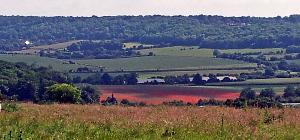 20140617_102632 red poppy field 300