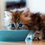 желудок котенка