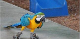 самые сумасшедшие попугаи
