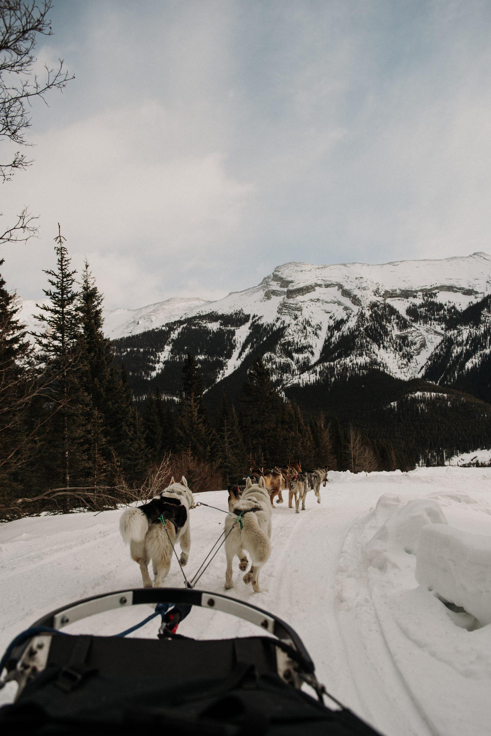 The Ultimate Banff Winter Guide - Dog Sledding