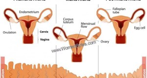 Learn all About Menstrual Periods