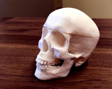 Prop skull designed by MacGyver