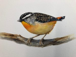Spotted pardalote watercolour by NatureArt Lab tutor Lesley Wallington