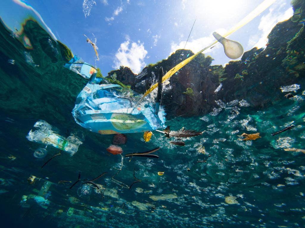 Saving Our Oceans Girls In Science 4 Sdgs International