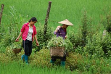 Who Owns the Farm? Land Rights Push in China Leaves Women Without a Plot To Stand On