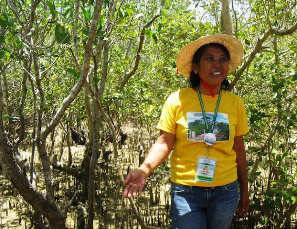 Saving the Mangroves Front