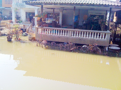 THAILAND: Typhoon Bopha survivors still need help says Red Cross