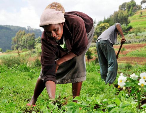 Global women farmers take land ownership rights to court