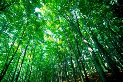 A forest of green
