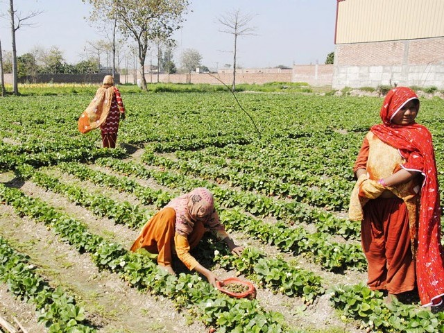 [Pakistan] Equal participation: 'Women farmers can help tackle food insecurity'