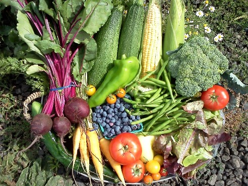 New report highlights importance of U.S. organic food production