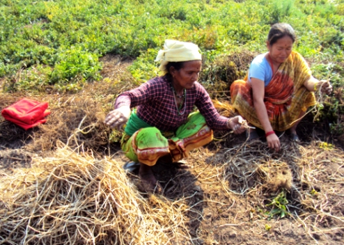 Nepal rural field workers uncertain under climate change