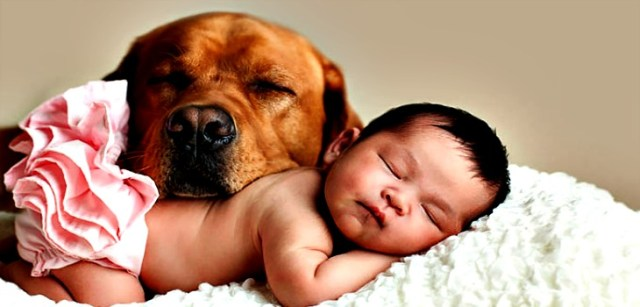 Pets and Small Babies – How to manage safety
