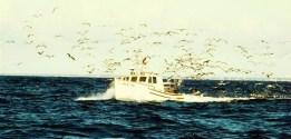 jack tar birds (2)