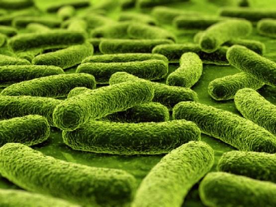 beneficial-bacteria