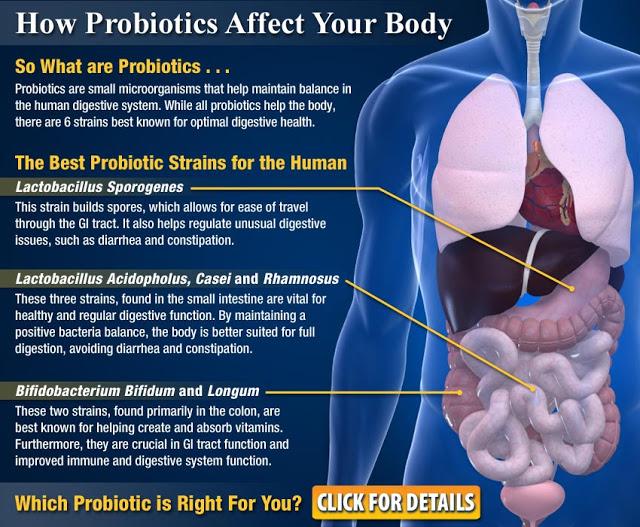 probiotic-4