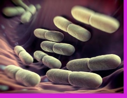 weight loss probiotic