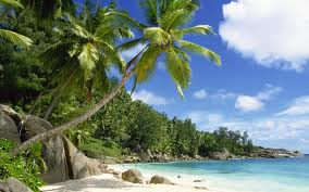 coconut trees beach