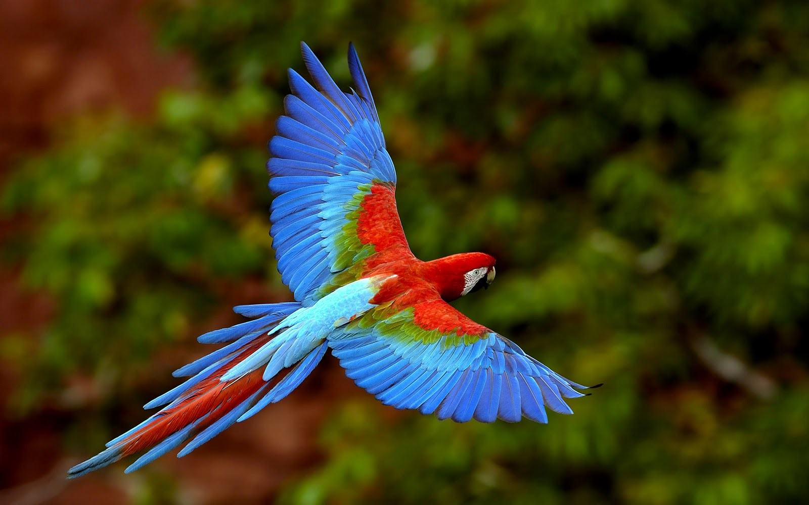 amazing pictures of nature free download apf 15