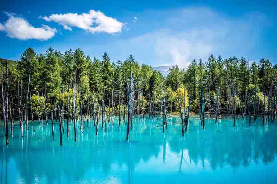 【北海道自駕】景。富良野特色景點、必訪秘境「美瑛青池」哇!是令女孩著迷的Tiffany藍