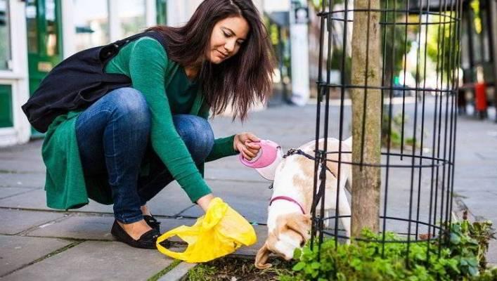 dog poop tells you