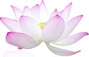 lotus180
