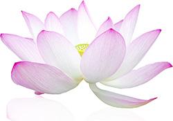 lotus4