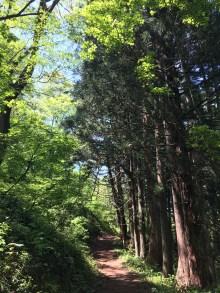 Hiking road at Kanaya mountain
