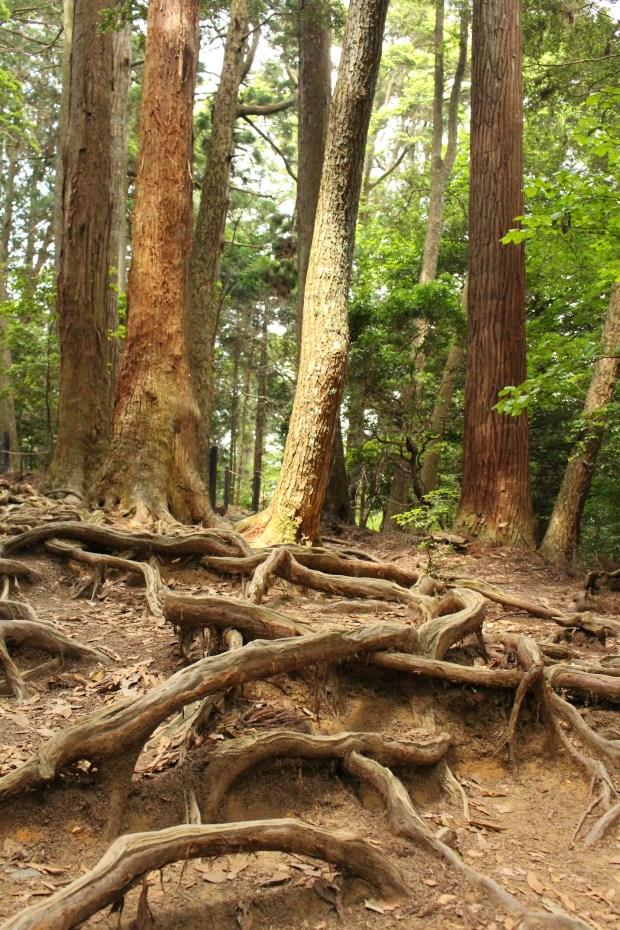 Mountain path in Kurama