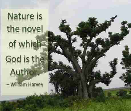 Nature quote by William Harvey
