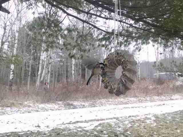 February Nature Day by Day: Wreath Suet Bird Feeder